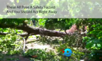 Tree Service Specialist Video